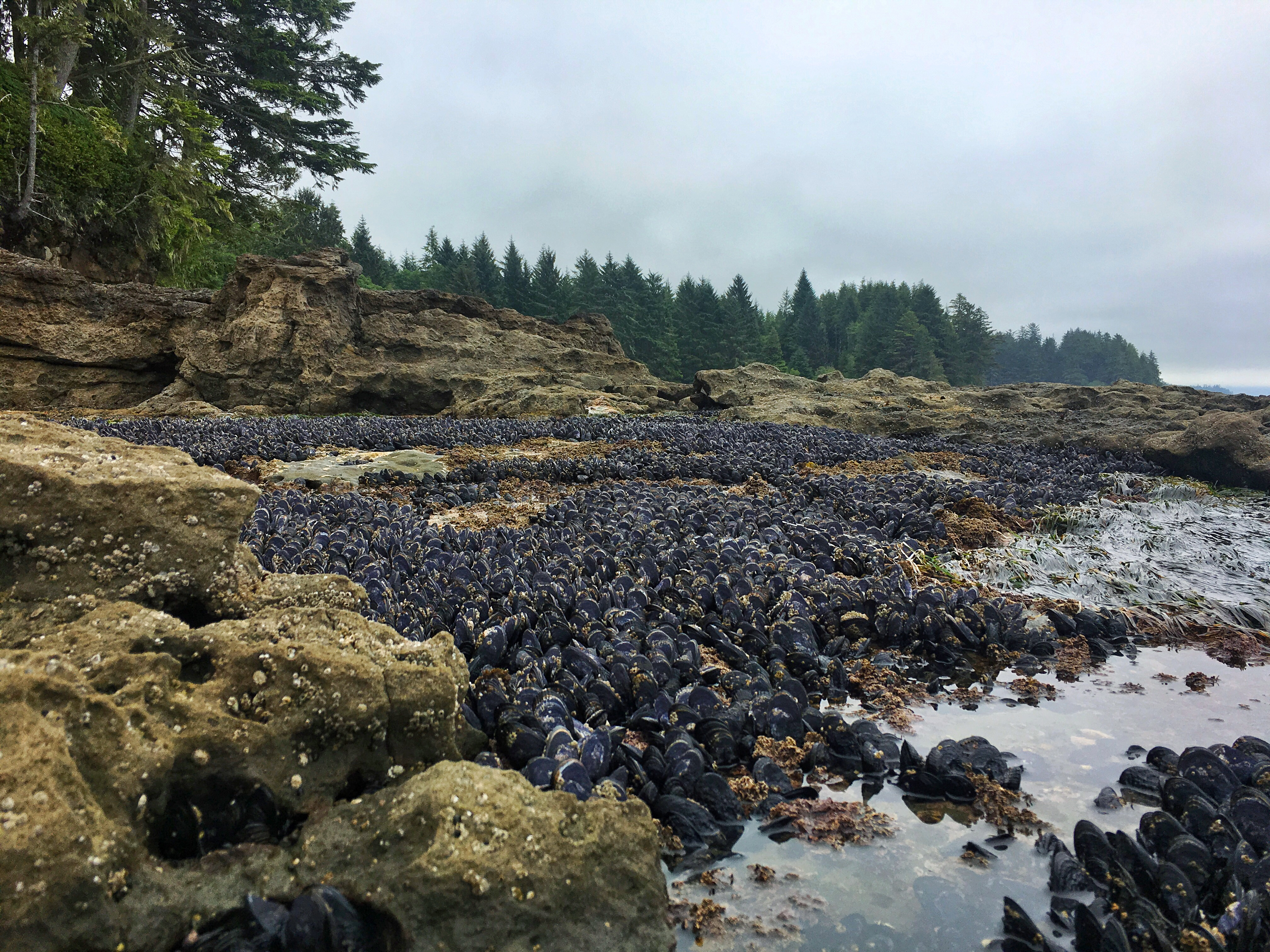 Vancouver island eh days 1 5 home is everywhere the tides were definitely on the rise when we got to the beach make sure to check the tide charts to see when highlow tides are before going but there nvjuhfo Gallery